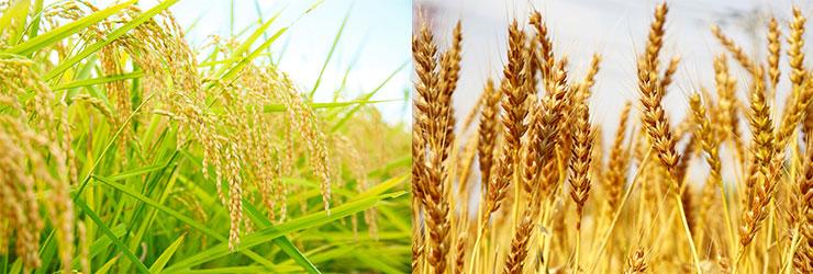 米・麦 収穫用フレコン